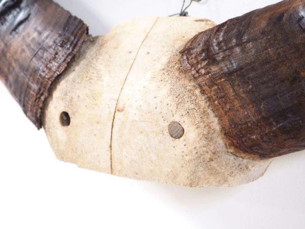 trophée années 30 buffle lucinevintage